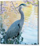 Heron - Beacon Hill Park Canvas Print