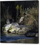 Heron By A Stream Canvas Print