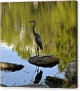 Heron By The Lake Canvas Print