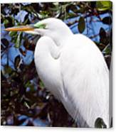 Heron Deep Contemplation Canvas Print