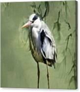 Heron Egret Bird Canvas Print