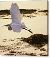 Heron Fly-by Canvas Print
