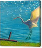 Heron Great White   Pastel   Canvas Print
