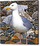 Heron Gull Canvas Print