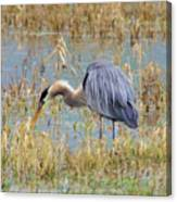 Heron Hunting In Shallows Canvas Print