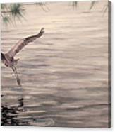 Heron In Flight Canvas Print