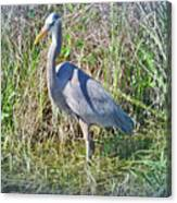 Heron In The Wetlands Canvas Print