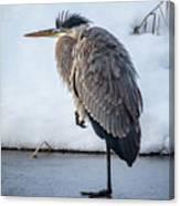 Heron On Ice Canvas Print
