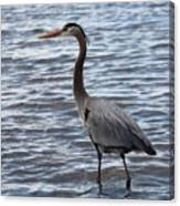 Heron On  Lake Guntersville Canvas Print