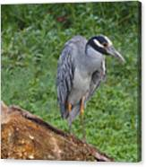 Heron On Log Canvas Print