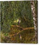 Heron On Path #g7 Canvas Print