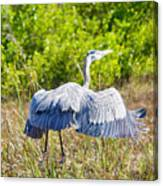 Heron On The Rise Canvas Print