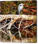 Heron Perch Canvas Print