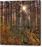 Heron Pond Cypress Trees Canvas Print