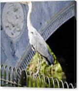 Heron Show Off Canvas Print