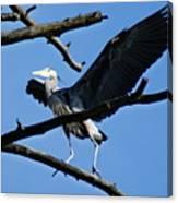 Heron Spreads Wings Canvas Print