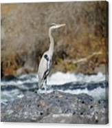 Heron The Rock Canvas Print