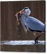Heron With Perch Canvas Print
