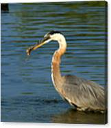 Herons Catch Canvas Print