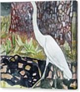 Herron Canvas Print