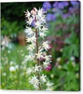 Heucharella - Fairy Bells Canvas Print