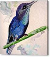 hHUMMINGBIRD 2   Canvas Print