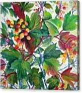 Hi-bush Cranberries Canvas Print