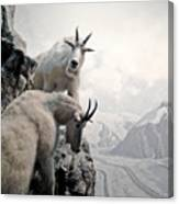 Hi We Are The Mountain Goats Canvas Print