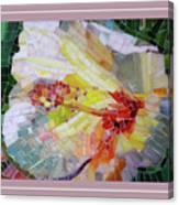 Hibiscus #3 Canvas Print