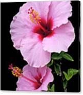 Hibiscus 7 V1 Canvas Print