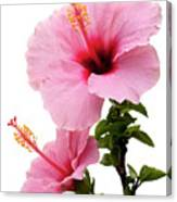 Hibiscus 7 V2 Canvas Print