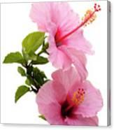 Hibiscus 7 V3 Canvas Print