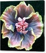 Hibiscus 9 Canvas Print