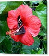 Hibiscus And Butterfly Diners Canvas Print