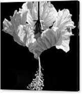 Hibiscus As Art 2 Canvas Print