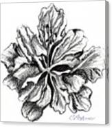 Hibiscus Bloom Canvas Print