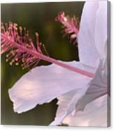Hibiscus Bloom Pastel Canvas Print