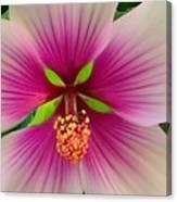 Hibiscus Face Canvas Print