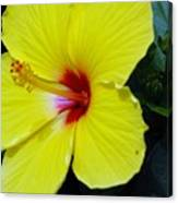 Hibiscus Flower 1 Canvas Print