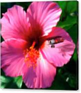 Hibiscus Fly-by Canvas Print