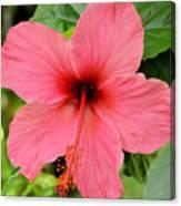 Hibiscus Front Canvas Print
