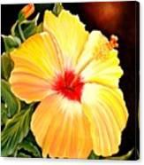 Hibiscus Glory Canvas Print