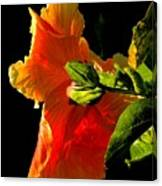 Hibiscus In The Light Canvas Print