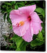 Hibiscus On A Rainy Day Canvas Print