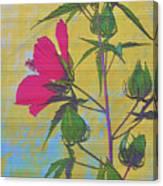 Hibiscus On Brick Canvas Print