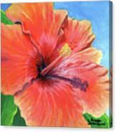 Hibiscus Passion Canvas Print