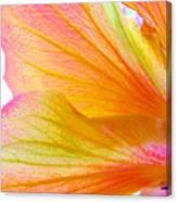 Hibiscus Petals Canvas Print