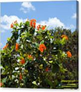 Hibiscus Rosasinensis With Fruit Canvas Print