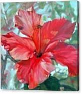 Hibiscus rouge Canvas Print