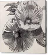 Hibiscus Sketch Canvas Print